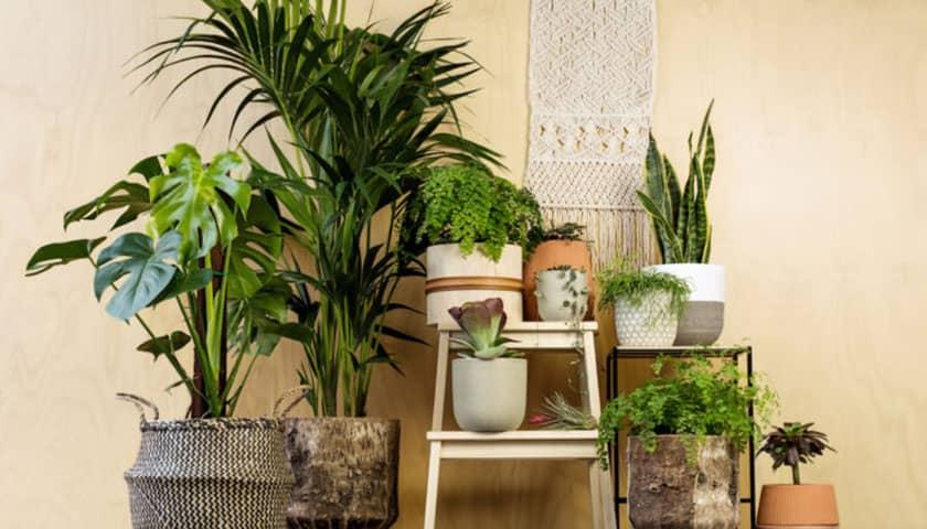 Vastu Shastra – Plants for Vastu Compliant home